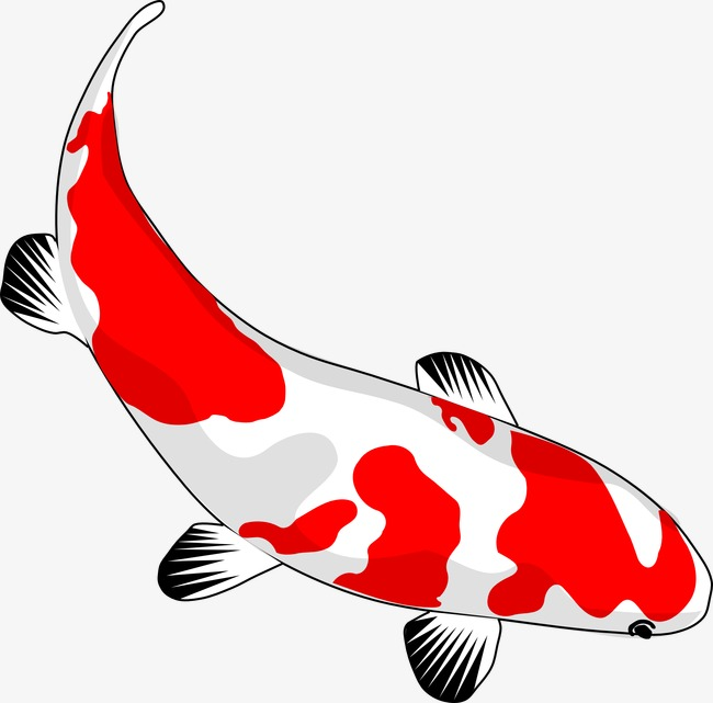 Koi Fish PNG HD - 127782