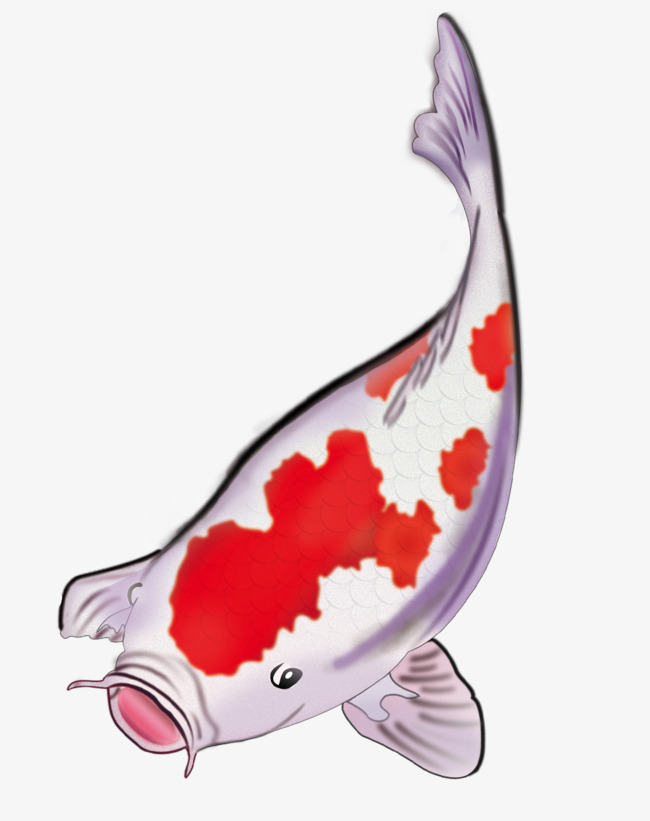 Koi Fish PNG HD - 127778