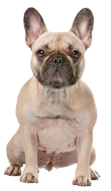 koira - Koira PNG