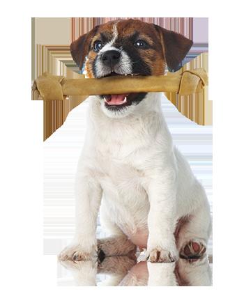 Koiran fysioterapiasta apua moneen vaivaan - Koira PNG