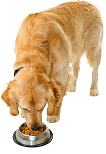 Koiran tasapainoinen täysravinto - Koira PNG