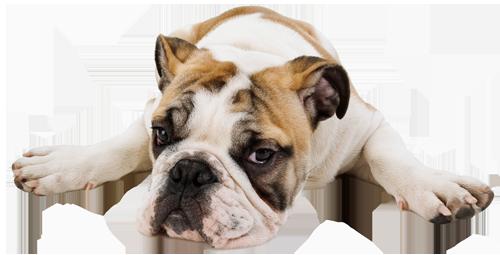 Valikko - Koira PNG