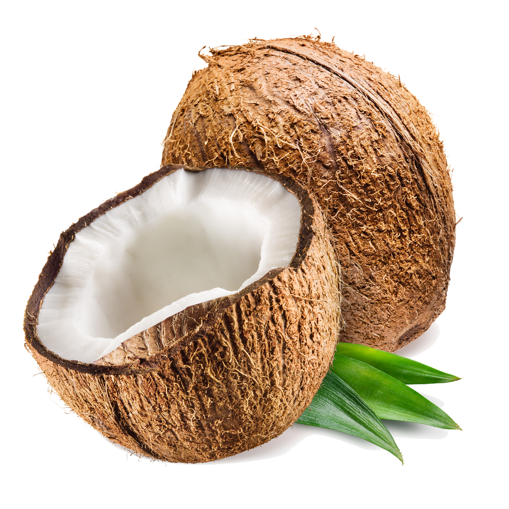 coconut.png - Kokospalme PNG