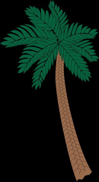 headerpalme - Kokospalme PNG