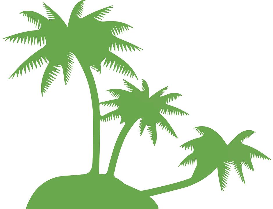 Kokospalme, Palme, Bäume, Hügel, Insel, Tropisch - Kokospalme PNG