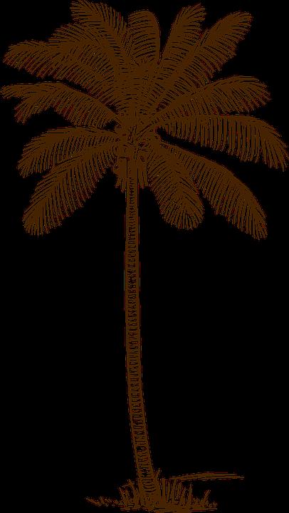 Palme, Kokospalme, Palm, Bäume, Kokosnuss - Kokospalme PNG