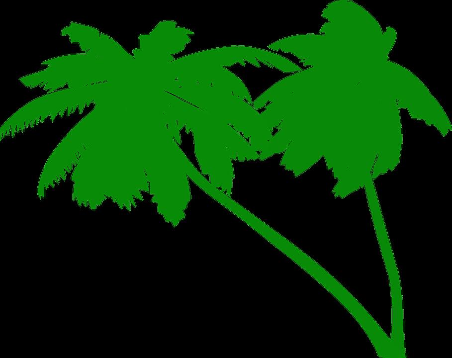 palmen kokospalme kokospalmen tropisch strand - Kokospalme PNG