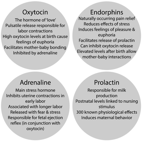 hormones-labor-birth-oxytocin.png - Labor Birth PNG