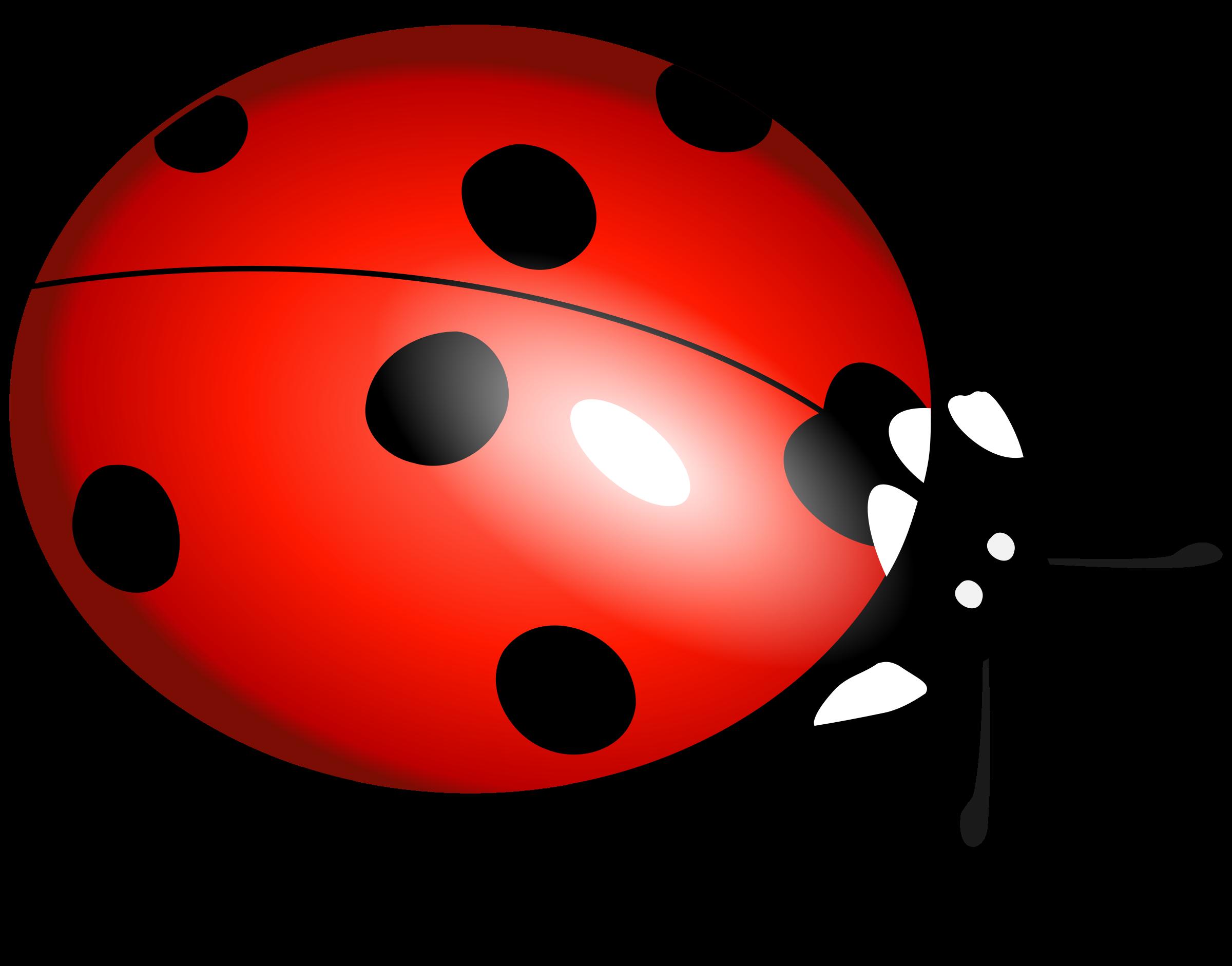 Ladybug HD PNG - 90623