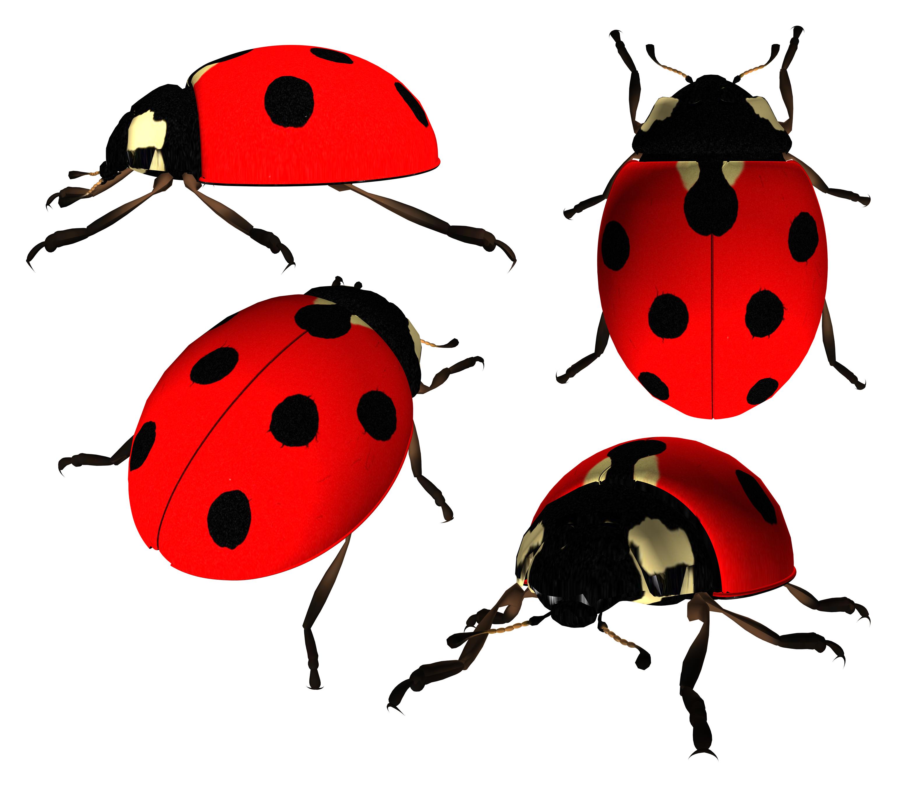 ladybug PNG image - Ladybug HD PNG