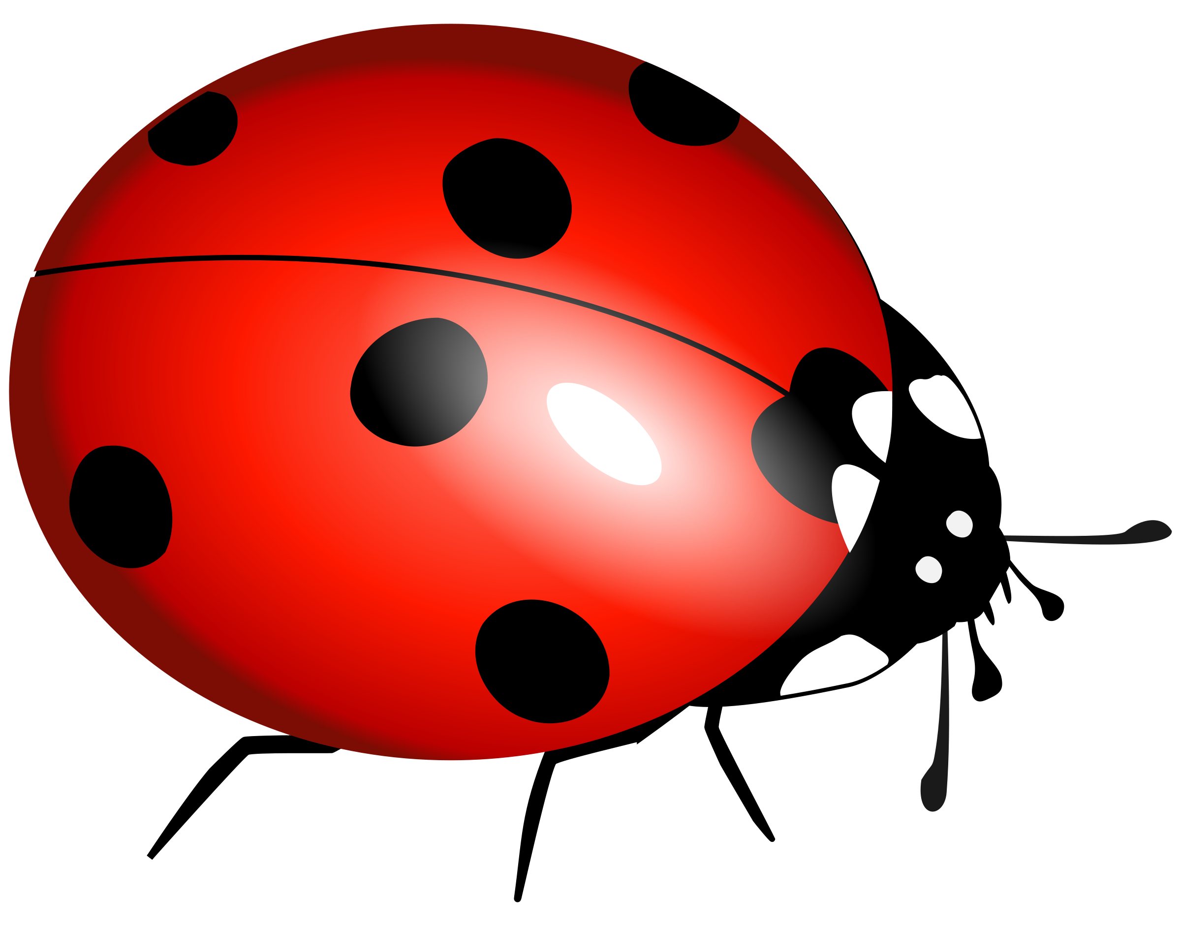 Ladybug PNG Transparent Image