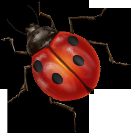 ladybug PNG image