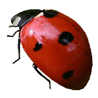 Ladybug Png Image PNG Image - Ladybug PNG