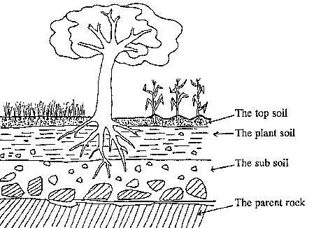 The soil: How the soil is mad