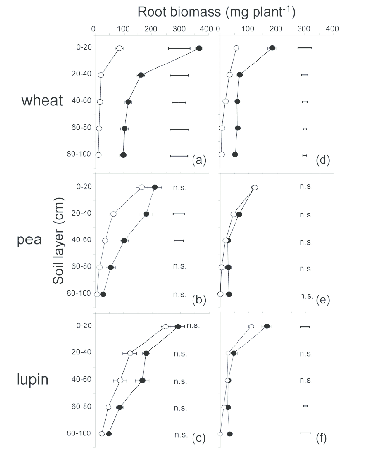 Root biomass of wheat, pea and lupin at different soil layers in treatment  P1 ( - Layers Of Soil PNG Black And White