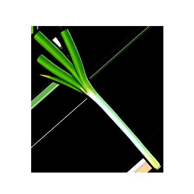 Leek PNG - 61507