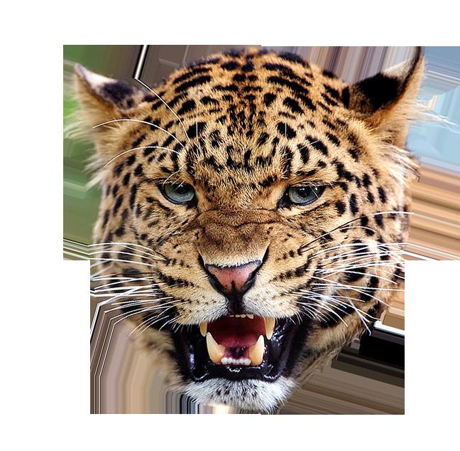 Leopard Face PNG-PlusPNG.com-648 - Leopard Face PNG