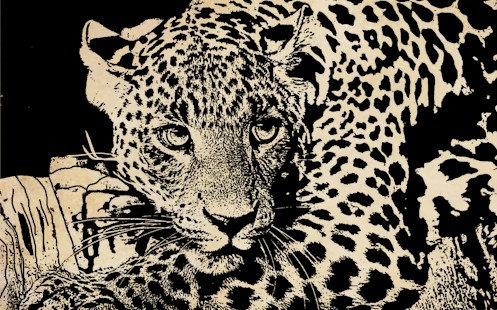 Leopard Face PNG - 42738