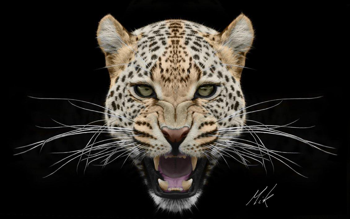 Leopard Face PNG