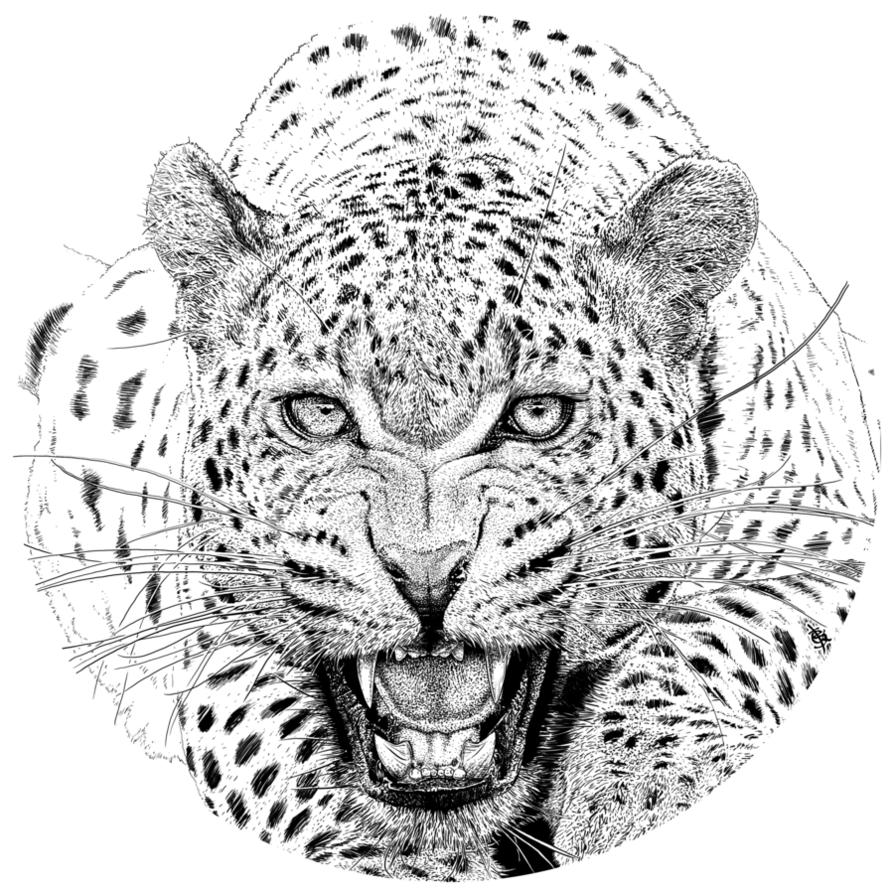 Leopard Face PNG - 42736