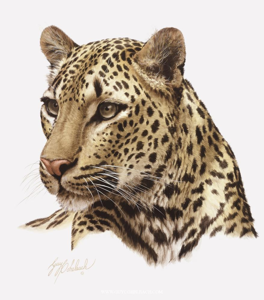Paintings - Leopard Face PNG