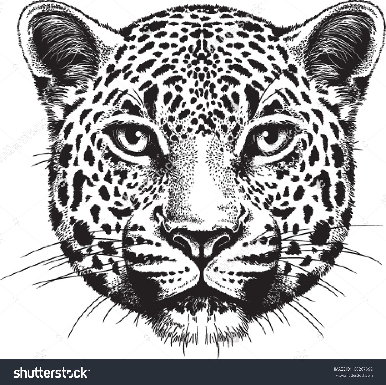 Leopard Face PNG - 42742