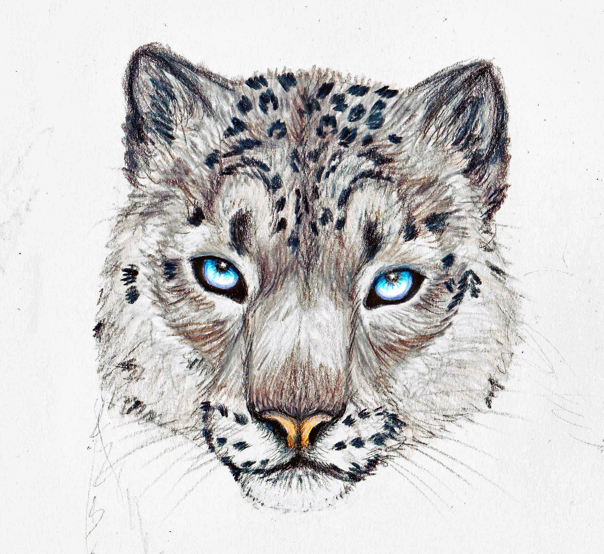 Snow Leopard by SingapuraCat Snow Leopard by SingapuraCat - Leopard Face PNG