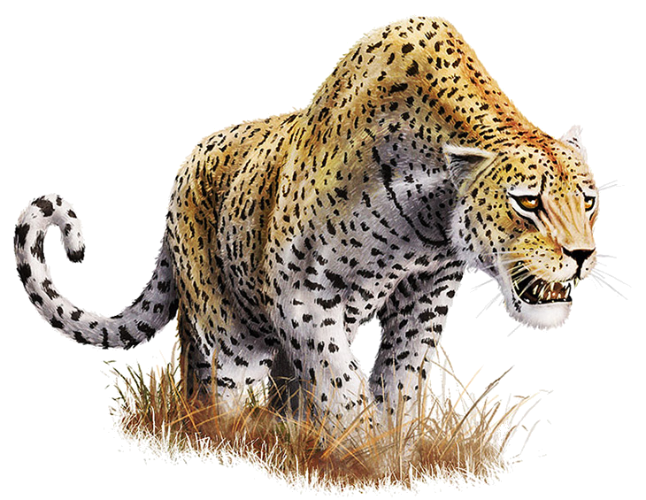 Leopard HD PNG Transparent Leopard HD.PNG Images.