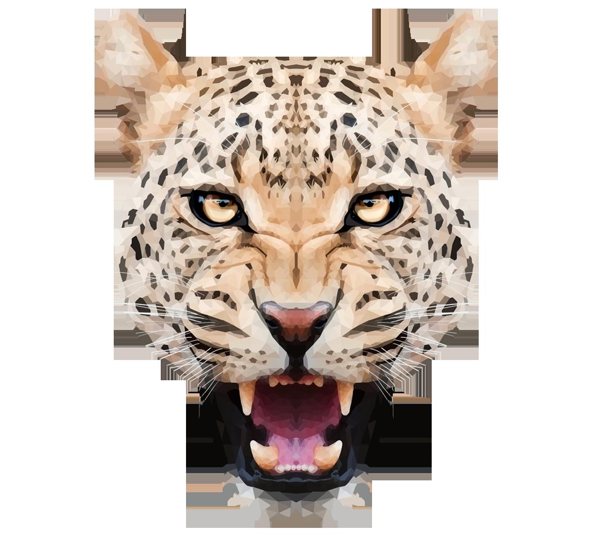 Leopard PNG - 24780
