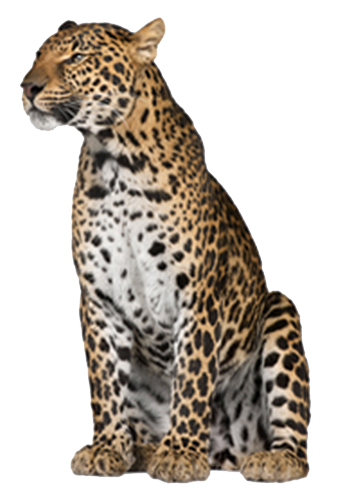 Leopard PNG - 24774