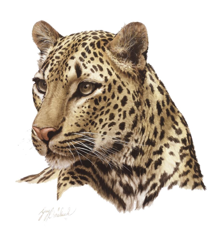 Leopard PNG - 6329