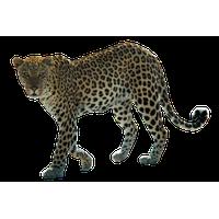 Leopard PNG - 24781