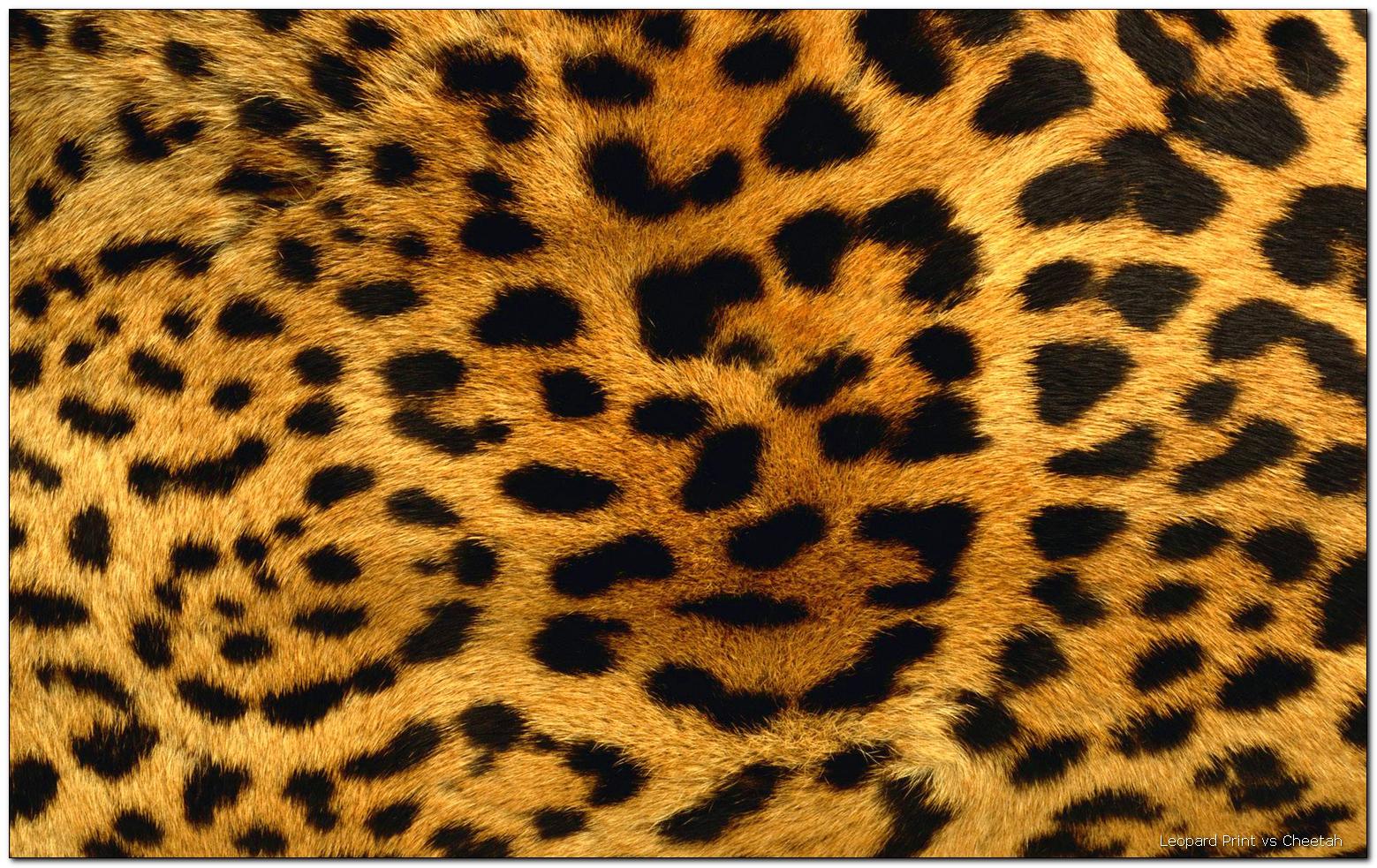 Cheetah Print u2013 - Leopard Print PNG