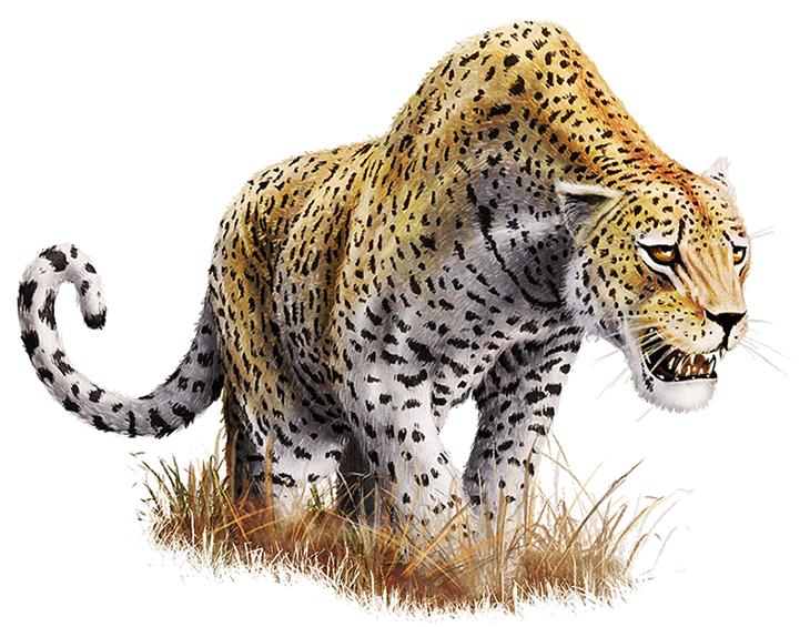 Leopard PNG - 6338