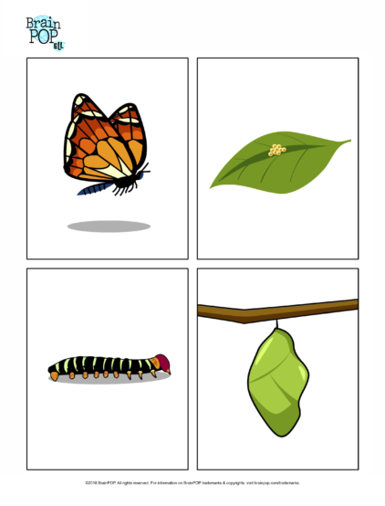 Butterfly Life Cycle Images - Life Cycle Of A Butterfly PNG