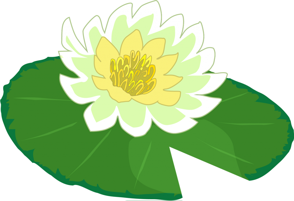 Lily Pad Picture #2278717 - Lily Pad PNG