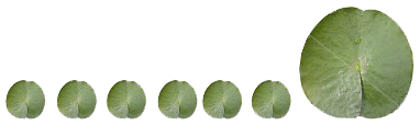 Lily Pad PNG - 73352
