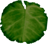 Lilypad MM.png - Lily Pad PNG