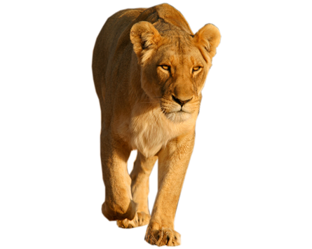 Lion PNG - Lion And Den PNG