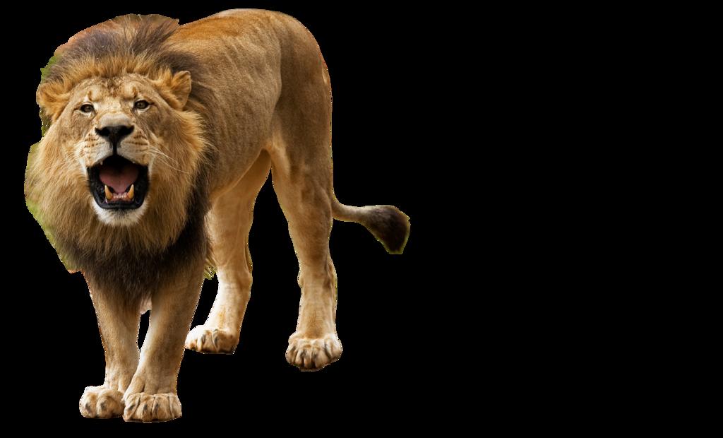 lion png by kasirun-hasibuan PlusPng.com  - Lion And Den PNG