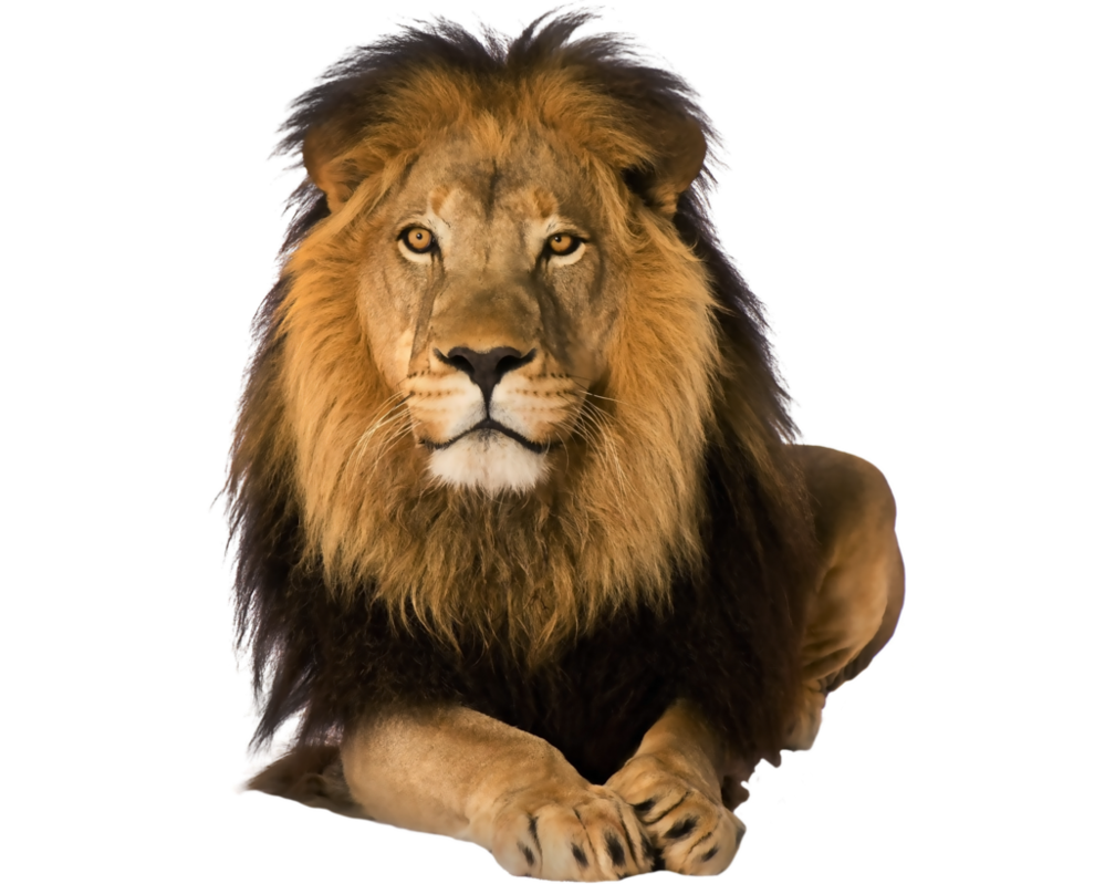 Lion png by kooyooss PlusPng.