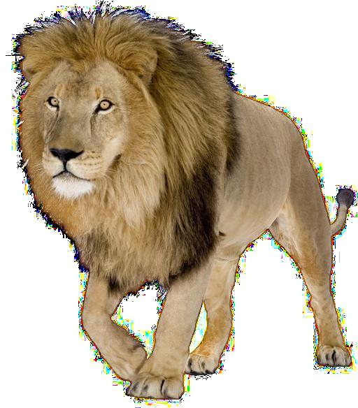 Lion HD PNG-PlusPNG.com-512 - Lion HD PNG
