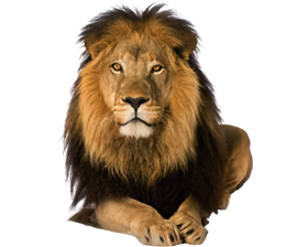 front face pre cut lion - Lion HD PNG