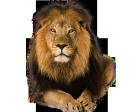 front face pre cut lion - Lion HD PNG