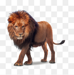 lion, Wild Beast, Feline, 3D PNG and PSD - Lion HD PNG