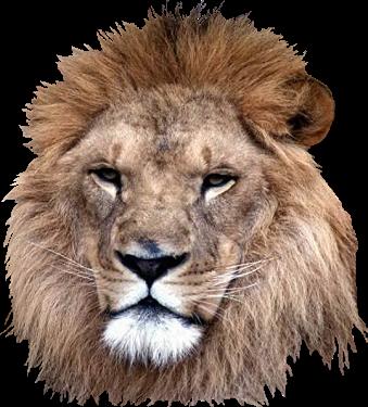Lion Head PNG HD-PlusPNG.com-339 - Lion Head PNG HD