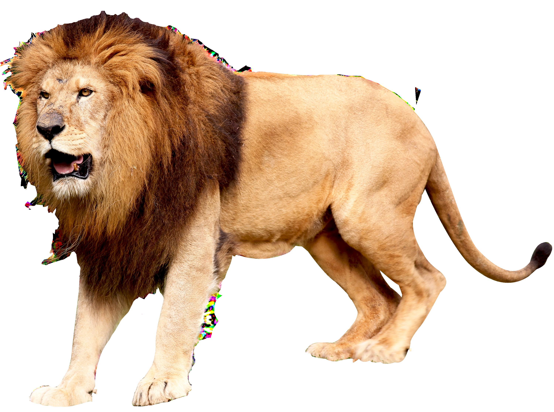 Lion Head PNG HD Transparent Lion Head HD.PNG Images ... - photo#47