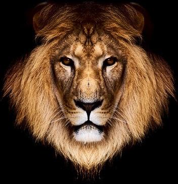 Lion Head PNG HD - 120298