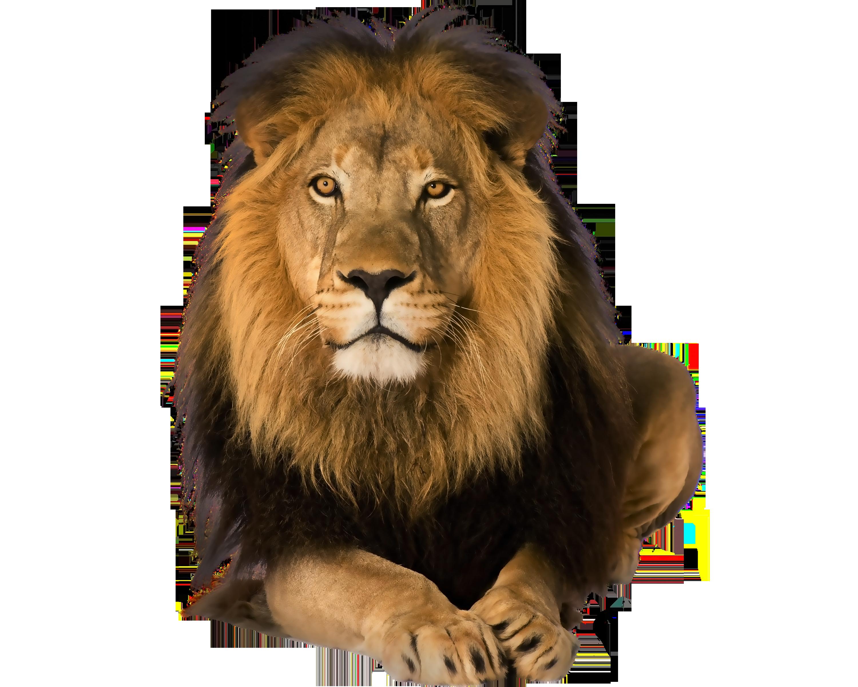 Lion PNG - 26934