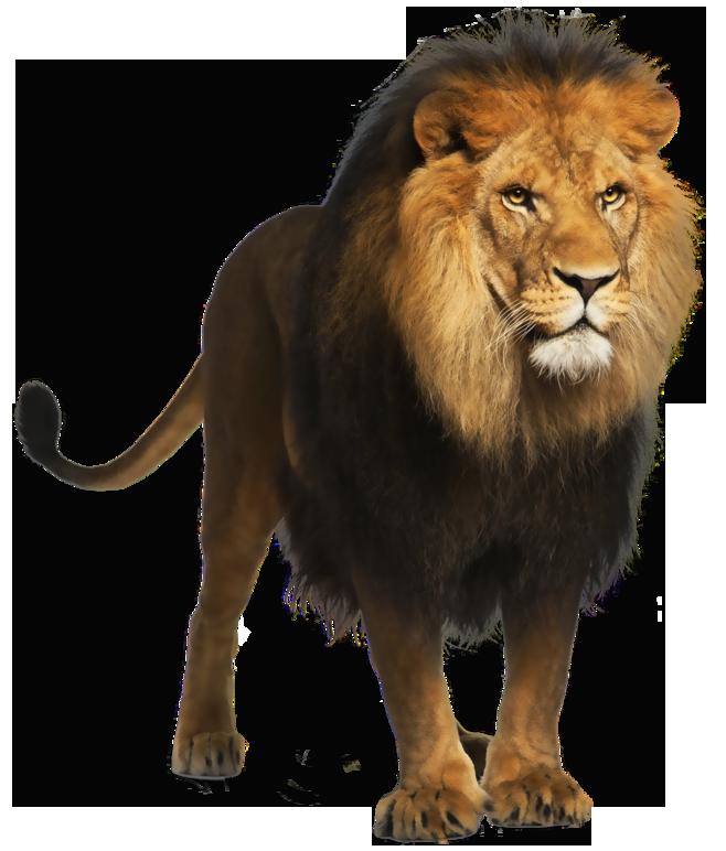 Lion PNG - 26930